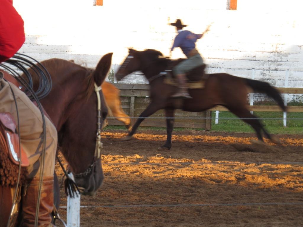Recordando o Passado e Rodeio de Amigos vencem a segunda etapa do Campeonato de Laço